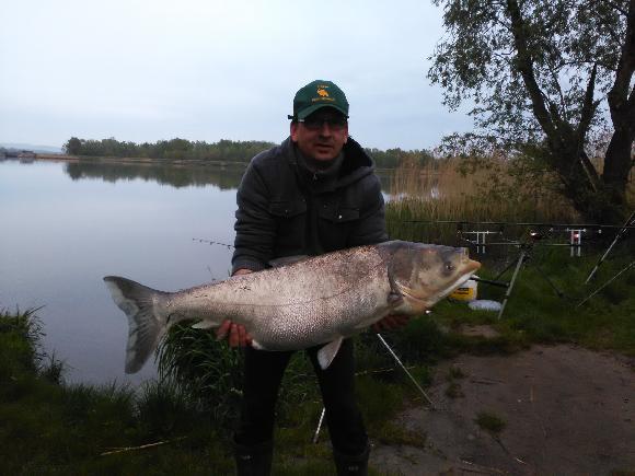 Tolstolobik bílý 110 cm - 20kg Hlavsa Jiří